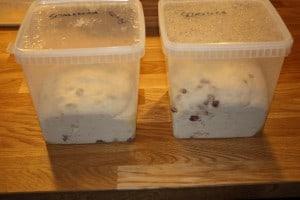 Manitoba boller med pecan og tranebær